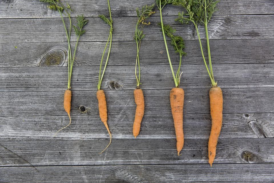 The successful innovator is like a master carrot grower: he weeds out the smaller carrots to leave space and water for the larger ones.