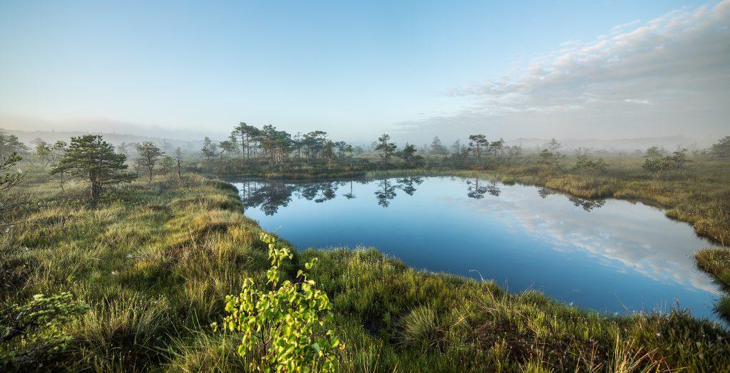 wetland landscape